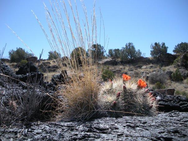 Vibrant cactus are plentiful in the volcanic earth