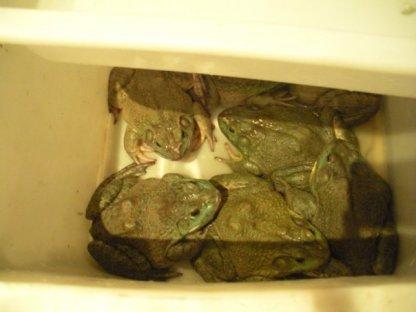 Toads...
