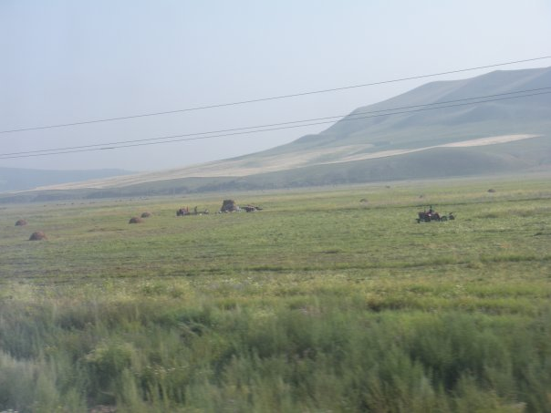 Very grassy Grasslands of Mongolia
