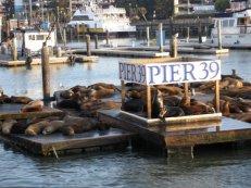 Pier 39, Wharf home to the San Fran Sea Lions!