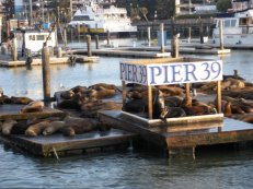 Pier 39, Wharf home to the San Fran Sea Lions!
