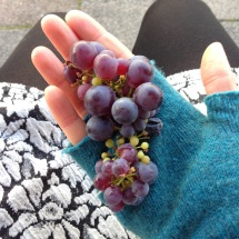 Scandinavian grapes are truly divine