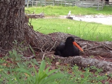 ...birds love them...