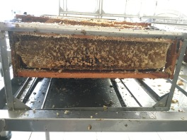 Used honey comb racks, waiting to be returned to the bees