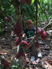 Juan Flores and his cacao tree