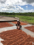 Beans drying in the sun