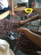 Small batches of beans are still sorted by hand