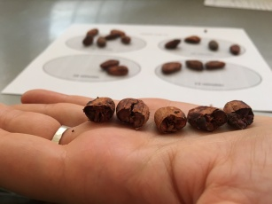 Roasted beans, from left to right: 18 mins, 20 mins, 22 mins, 25 mins and 27 mins