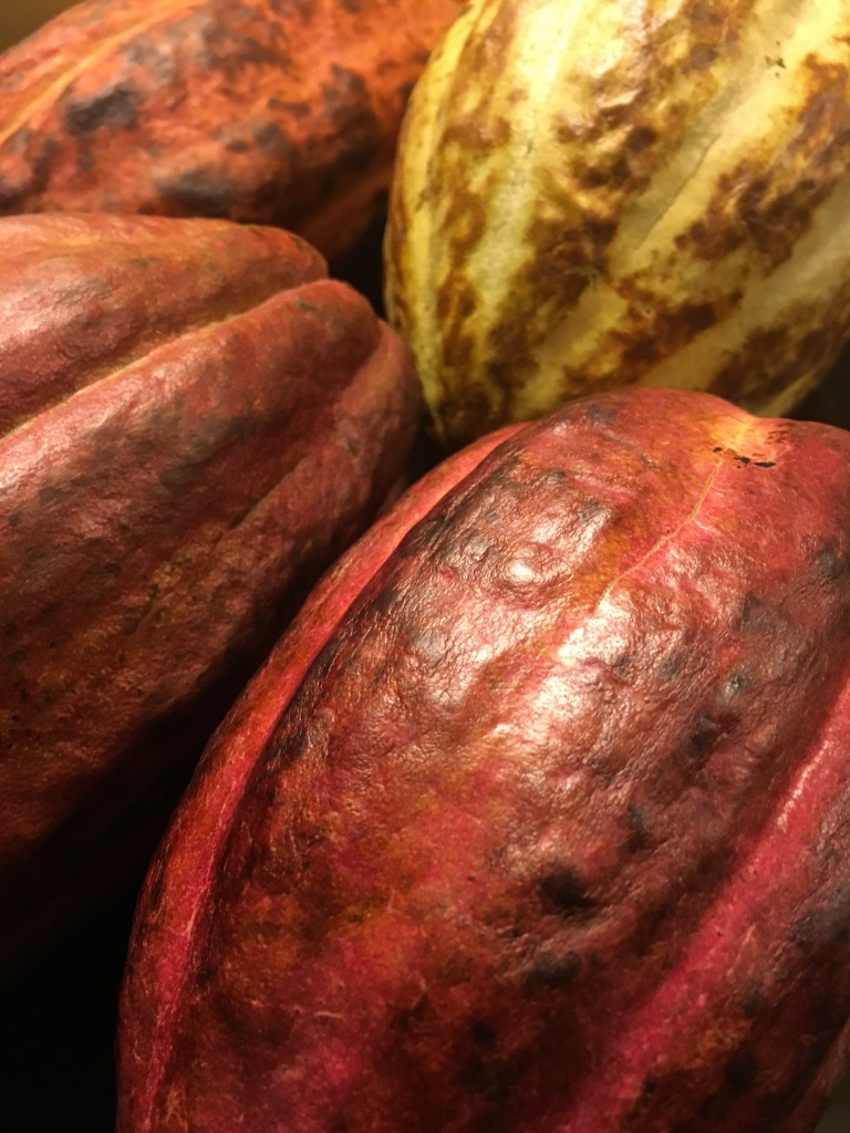 My cacao pod stash, on arrival at Heathrow!