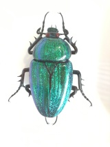 A glass scarab beetle (yeah, it's not a real bug!)