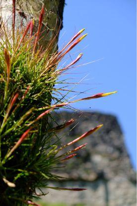 Wild air plants